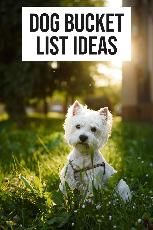 dog bucket list